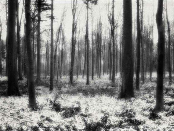 Rêve d'arbres assoupis sous la neige