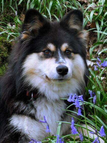 Nikki - mon fidèle compagnon de promenade