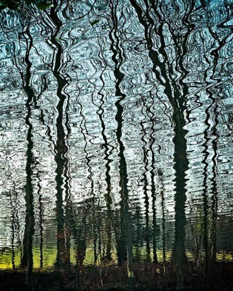 Rêve d'arbres #9