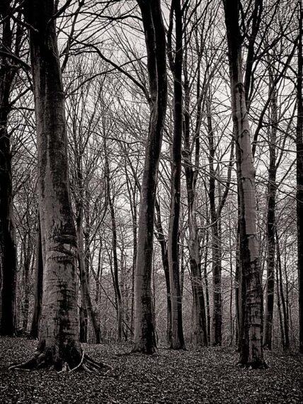 Rêve d'arbres